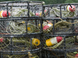 Crabbing Nets in Tee Harbor  Juneau  Southeast Alaska  Alaska  USA