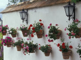 Geraniums along White Wall of Palacio de Mondragon  Ronda  Spain
