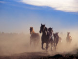 Wild Horses in the High Desert near Sun River  Oregon  USA