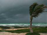 Dark Clouds Gather and a Palm Tree Blows