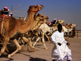 Official Starter Runs Away From Camels at Start of Race at Kuwait Camel Racing Club  Kuwait