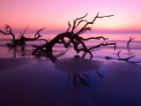 Tree Graveyard on Beach at Dusk  Jekyll Island  Georgia  USA
