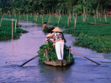 Women Rowing to the Market on the Mekong Delta  Vietnam