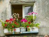 Window in Old Town  Istria  Croatia