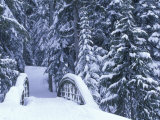 Snow-Covered Bridge and Fir Trees  Washington  USA
