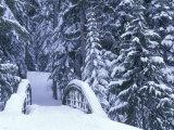 Snow-Covered Bridge and Fir Trees  Washington  USA
