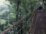 Visitors on Suspension Bridge Through Forest Canopy  Monteverde Cloud Forest  Costa Rica