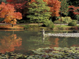 Reflecting Pool in Japanese Garden  Seattle  Washington  USA