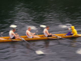 Rowing Shell in Montlake Cut  Seattle  Washington  USA