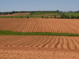 The Furrows in the Red Dirt of the Island Produce Great Potatoes  Prince Edward Island  Canada