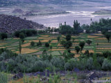 Agriculture Fields  Indus Valley  Pakistan