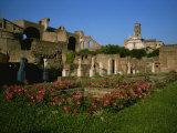 The Garden of the Vestal Virgins in the Roman Forum