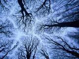 Winter View of Canopy  Jasmund National Park  Island of Ruegen  Germany