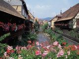 Colmar  Route du Vin  Alsace  France