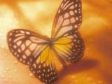 Monarch Butterfly in Sunlight on Orange Background