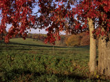 Autumn Color Frames the Rolling Hills of the Virginia Foxhunt Country