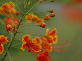Close-up of Bright Red and Yellow Flowers Blooming on a Green Stem