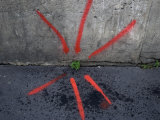 Neon Paint Points to a Plant Emerging from a Crack in the Sidewalk