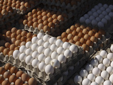 Stacks of Fresh White and Brown Eggs in Sectioned Cardboard Cartons