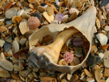 Close View of Surf-Shattered Shell Shards along the Shore