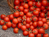 A Pile of Freshly Picked Tomatoes with Vines