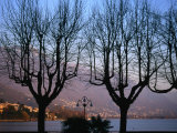 Bare Trees in Front of Locarno and Lake Maggiore at Dusk  Locarno  Switzerland