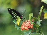 Butterfly Perched on a Flower and Sipping Nectar