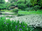 Heian Shrine Garden  Kyoto  Japan