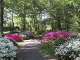 Azalea Way  Botanical Gardens  Bronx  NY