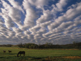 A Blanket of Clouds Hovers over Horses Grazing in a Pasture