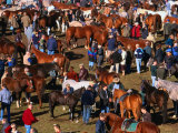 The Masses Gather for the Ballinasloe Horse Fair  Ballinasloe  Ireland