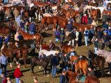 The Masses Gather for the Ballinasloe Horse Fair  Ballinasloe  Ireland