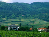 Village of Pfaffstatten Amongst Vineyards with Vienna Woods Behind  Near Baden  Austria