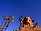 Date Palms along the Avenue of the Sphinxes  Luxor  Egypt