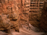 """Wall Street"" Canyon Sides  Bryce Canyon National Park  Utah  USA"