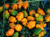 Habanero Chillies at Tepoztlan Market  Tepoztlan  Morelos  Mexico