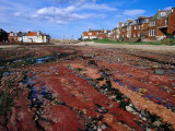 Seaside Resort Town at Low Tide North Berwick  East Lothian  Scotland