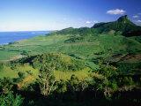 Tea Plantations  Mauritius