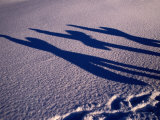 Shadows of Snow-Boarders at a Ski Resort  Gotland  Sweden