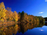 Autumn Lakeside Trees  Halland  Sweden