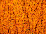 Marigolds for Sale at Flower Market Below Howrah Bridge  Kolkata  India