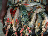 Lobster on Tray About to Be Barbecued  Djibouti  Djibouti