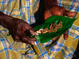 Indigenous Veddah or Wanniyala-Aetto Man Holding Betel Nuts  Colombo  Sri Lanka