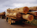 Logging Trucks on Road  Bolaven Plateau  Laos