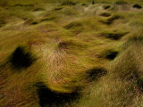 Thick Grasses Blow in the Wind