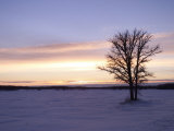 Tree During Sunrise  Gimli  Manitoba