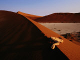 Snake on a Sand Dune