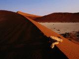 Snake on a Sand Dune