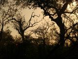 African Landscape - Kruger National Park