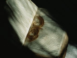 Lock of Hair in a Family Bible